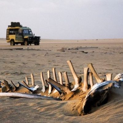 Whale Skeleton and Landrover
